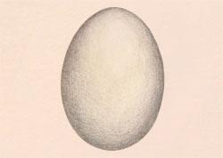 fi-Egg