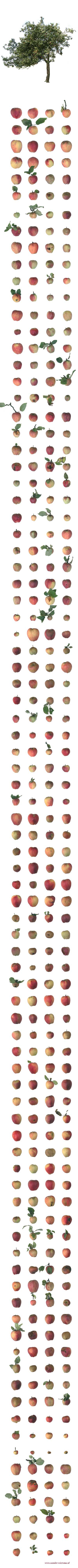 all-apples-of-one-tree